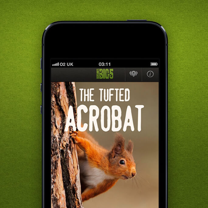 A Mobile phone with a picture of a red squirrel on the screen